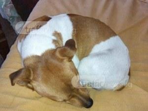 Изчезнало куче край Пловдив се завърна у дома, но зверски пребито СНИМКИ