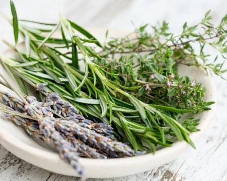 С аромат на мащерка – полезни свойства и противопоказания