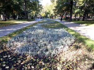 Хиляди есенни цветя разцъфтяха в Пловдив СНИМКИ