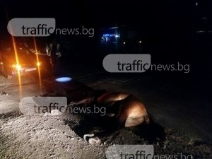 78-годишен е пострадалият каруцар от катастрофата край Ягодово, каруцата – без сигнализация