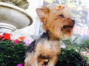 След сигнала на TrafficNews.bg: Намери се загубеното кученце в Белащица