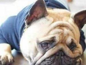 Зверство! Фен на ЦСКА изрита куче и го уби намясто