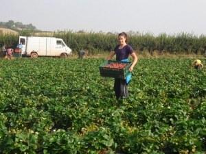Българите в чужбина вече с по-високи заплати
