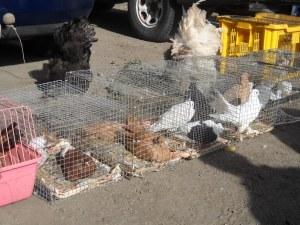 Заради птичия грип: Затвориха пазарите в Асеновград и Раковски