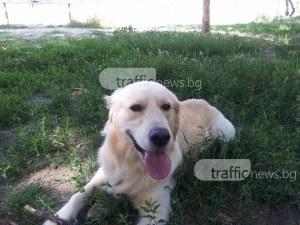 """Погнаха над 200 души в Кършияка, не са си плащали """"такса куче"""""""