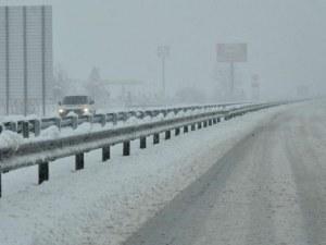 Борят природните стихии с кипариси по магистралата