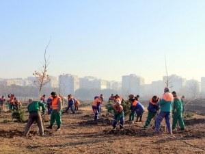 Махнаха обособени лични стопанства в Лаута, засадиха ги с дървета СНИМКИ