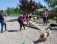 Кампания днес в Пловдив: Бездомни кучета си търсят дом за Коледа