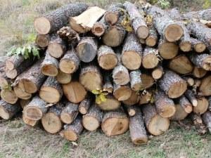 Бивш заместник-кмет задържан за незаконна дървесина