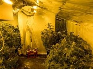 Разбиха модерна наркооранжерия на тавана на къщата на млад мъж ВИДЕО и СНИМКИ