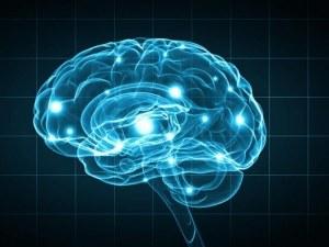 Проследиха човешка мисъл по пътя й в мозъка