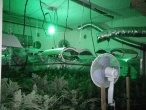 Мега удар на полицията! Откриха стотици саксии с марихуана в дома на 54-годишен СНИМКИ и ВИДЕО