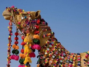 Не допуснаха камили до конкурс за красота заради... ботокс