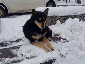 История като от филм: стопанинът на това куче не се върна, но то го чака всеки ден СНИМКИ
