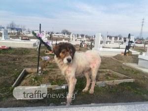 Изритано куче яде свещи на Пловдивските гробища. От какво по-точно се възмутихте? СНИМКИ