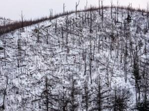Урагани вилняха в Смолянско, повалиха огромни масиви с дървета