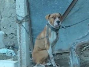 До 5 години затвор грозят собственика на кучето, убило 3-годишно дете