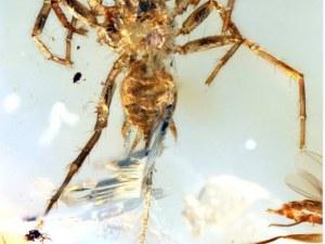 Откриха паяци с опашки, наподобяващи тези на скорпион