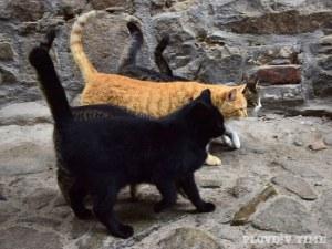 2500 улични котки минали под ножа в Пловдив