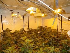 Ето я оранжерията за марихуана в бивша фабрика в село Скутаре ВИДЕО и СНИМКА