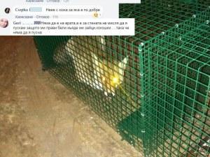 Хванаха в капан лисица край Пловдив, измъчват животното и се канят да го одерат СНИМКИ