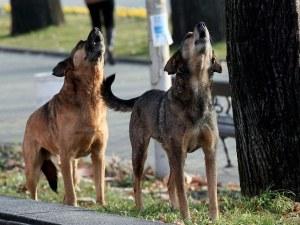 Осъдиха Община заради дете, нахапано от куче