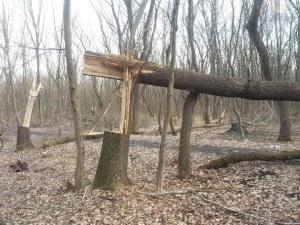 Хванаха трио с брадви да повалят дървета в коритото на Марица