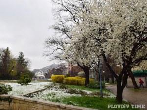 Красотата, която донесе пролетният сняг в Пловдив СНИМКИ