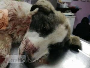 Полуживо куче на пътя накара млад мъж да изригне