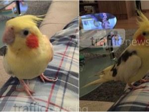 Пъстър папагал се изгуби в района на болница Каспела! Ако го забележите, сигнализирайте СНИМКИ