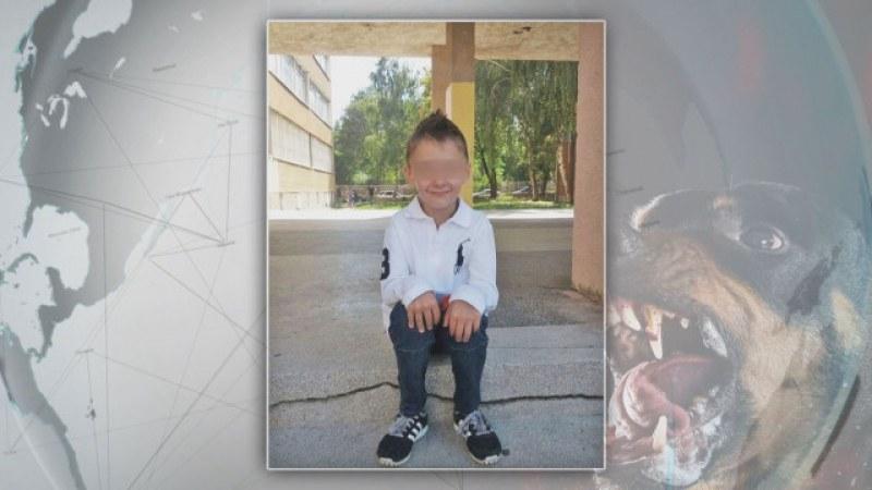 Пуснаха под гаранция виновника за инцидента с нахапано от ротвайлер дете