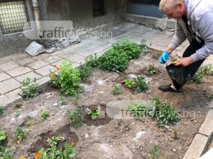 Внимание! Наръсиха градинка с отрова за кучета СНИМКИ