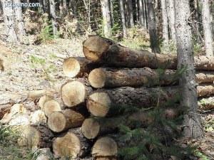 50-годишен работник почина, затиснало го дърво по време на сеч