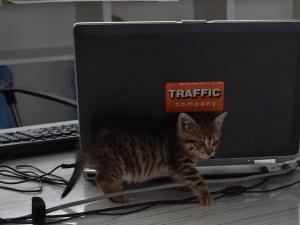 Trafficnews.bg търси любящ дом на тази мъркаща малка красавица