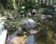 Пловдивският зоопарк може да взима пример от най-стария в света СНИМКИ