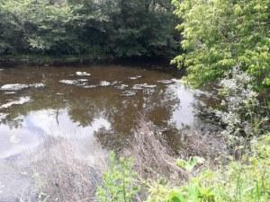 Екокатастрофа: Намериха умряла риба в река в Пловдивско ВИДЕО