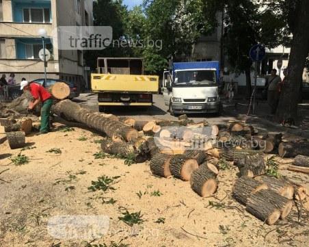 Падналото дърво е на същата улица, през която вчера минаха стотици деца ВИДЕО+СНИМКИ