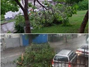 Бурята удари Кючука и Тракия, изкорени стълбове и дървета СНИМКИ+ВИДЕО