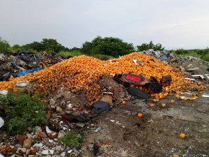 Смрад и зараза! Тонове плодове и зеленчуци гният край Пловдив СНИМКА