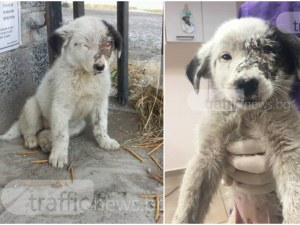Поредна жестокост в Пловдивско! Цигани пребиха почти до смърт бебе куче, добри хора му помогнаха СНИМКИ
