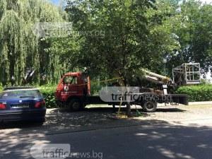 """Режат опасни дървета на булевард """"Марица"""" СНИМКИ"""