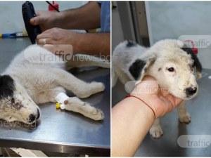 Ромите, които зверски пребиха кученце от Ягодово, го малтретирали системно! Предстоят му операции