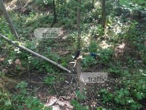 Дърветата в Лаута започнаха да пречат?! Вандали хванаха секирата СНИМКИ