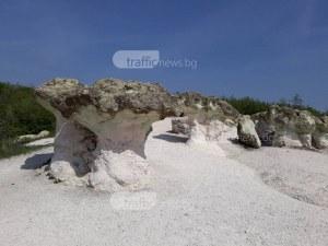 Наберете си от Каменните гъби – само на час и половина от Пловдив са! СНИМКИ