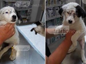 Пребитото от роми кученце в Ягодово загуби и крачето си! Жители са наясно кои са виновниците СНИМКИ