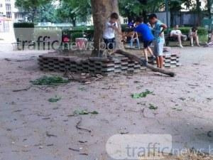 Паднал клон в парк в Пловдив по чудо не нарани дете СНИМКИ