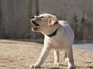 """Как кучетата надушват """"лошите хора""""?"""