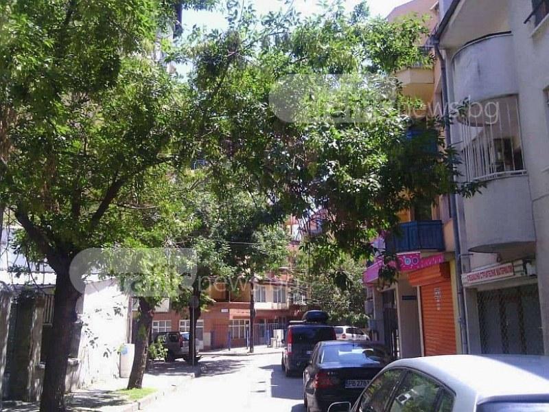 Клони се оплетоха в жици, заплашват пешеходците в центъра на Пловдив СНИМКИ