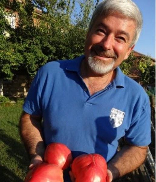 Кметът на Белозем се похвали с домати гиганти, собствено производство СНИМКИ