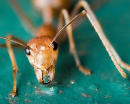 Toп 10 на най-болезнените ужилвания от насекоми ВИДЕО